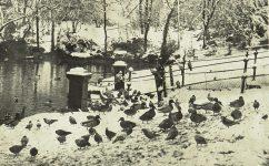 park - Český svět 17.01.1929
