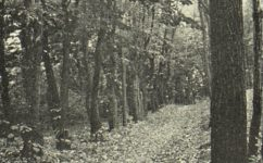 Kánálka - Český svět 4.10.1912