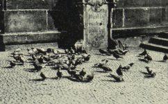 U křížovníků - Světozor roč. 13. č. 32