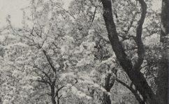 Strahovská zahrada - Světozor 30.04.1915