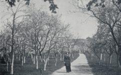 třešňová zhrada - Český svět 08.05.1914