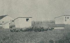 drůbežárna vysoké školy zemědělské - Český svět 09.12.1926