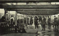 - Český svět 9.6.1905