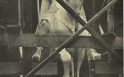 model koně -  Český svět 24.11.1904